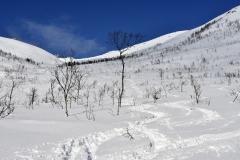 Smučarija v redkem brezovem grmičevju je bila pogosto najboljša, saj je bil sneg najbolj konstanten