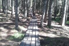 Pot k Črnemu jezeru