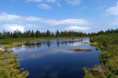 Ribniško jezero oz šotno barje
