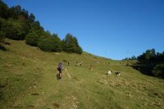 Pot na Črvov vrh
