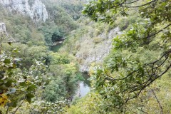 Zaraščen pogled v sotesko Reke