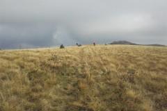 Nato zložno po travnatem grebenu