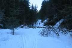 Začetek: ozka gozdna pot s precej podrtega drevja